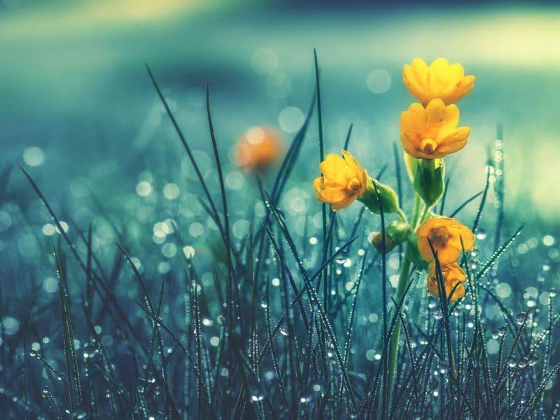 Firmamızla En Güzel Çiçekleri Gönderin